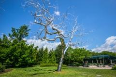 Art_Museum_Garden-